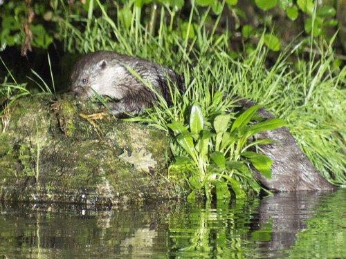 La Réserve de biosphère du bassin de la Dordogne